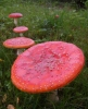 Interesting Wild Mushroom Facts