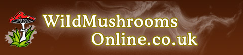 wildmushroomsonline.co.uk